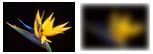 gaussian blur on HTML5 canvas element